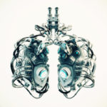 Replacement lungs
